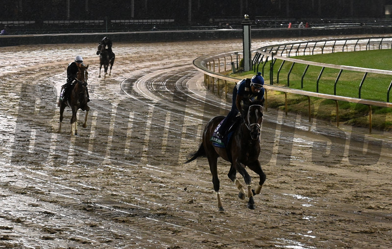 Breeders Cup entrants gallop through rain and mud this morning Thursday Nov. 1, 2018 at Churchill Downs the home of the 2018 Breeders' Cup in Louisville, KY.  Photo by Skip Dickstein