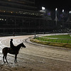 Marley's Freedom stands in the rain and mud this morning on the main track Thursday Nov. 1, 2018 at Churchill Downs the home of the 2018 Breeders' Cup in Louisville, KY.  Photo by Skip Dickstein
