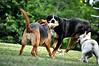 Maxi, Bella & Dexter