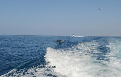 dolphin swim (ドルフィンスイム)