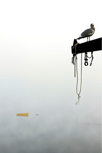 Gull Watch