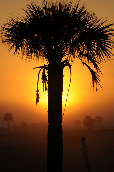 Vierra Wetlands  Florida Sunrise