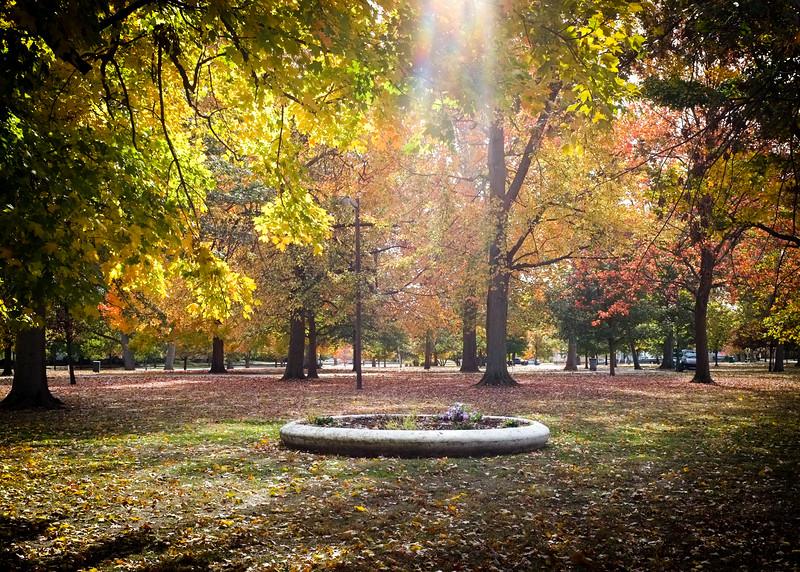 Collett Park