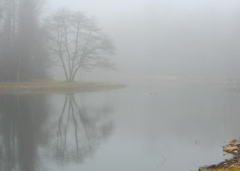 Dobbs Park Fog