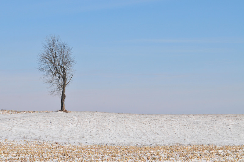 Along CR 300 E in Clay County January 10, 2010