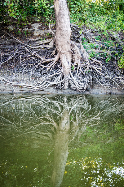 Wabash River Tree Roots September 2017