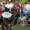 World Famous Frisbee Dogs