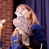 American Eagle Foundation presenting their live Raptor show at the Sandhill Crane Festival at Birchwood TN.   Saker Falcon