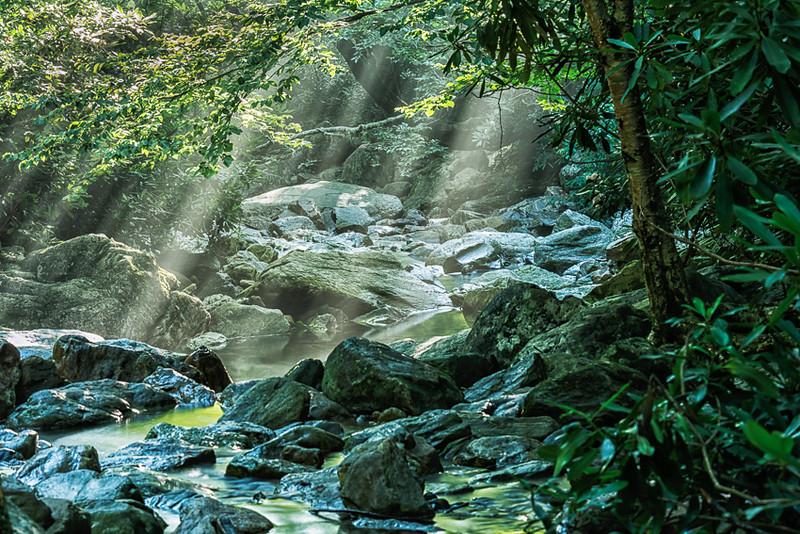 Forest Stream Scenic