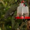 Milpe Bird Sanctuary