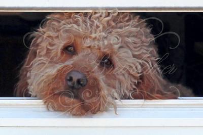 Suzie's Dog, Bucky