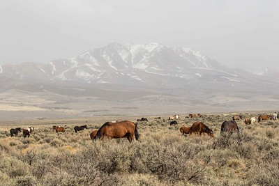 Wild Horses Utah #3