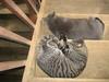Sara Wall's cats.