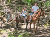 One mule train a day.  About 10 people make the trip.  They spend several hours taking a tour of the settlement and then they return at 3 p.m.  One needs special sponsorship to spend the night in Kalaupapa.