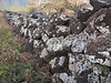 Lava rock walls (with lichens) are ubiquitous.