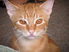 Another of Terrie's cats