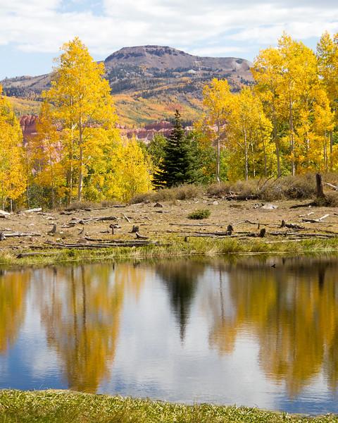 Tree Reflect