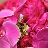 1-Rings Flowers-Brian Amanda 139