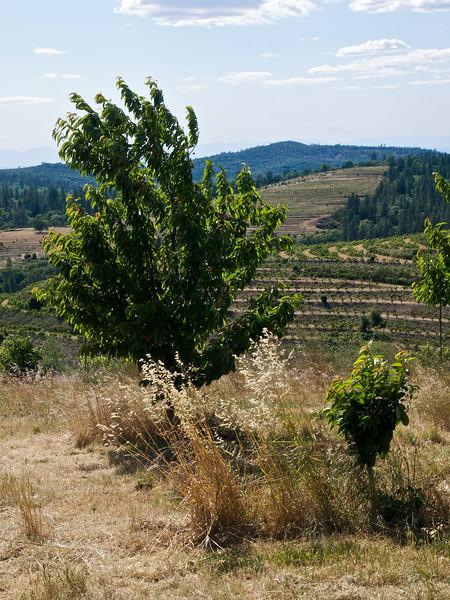 2008.05.22 Filaki Farms, Oregon House, CA