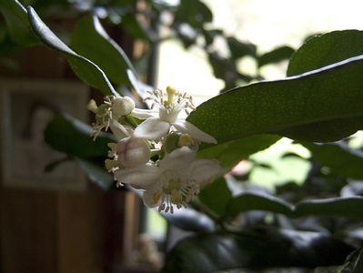 Briceland flowers