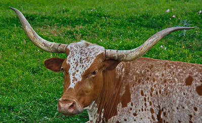 Bridgeland_Photo_Group_Washington_Co_trip_4-2016_Longhorn_D75_5159