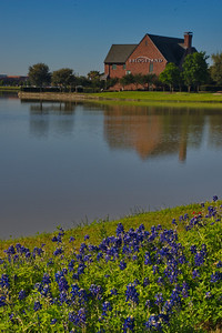 Bridglenad_Bluebonnets_RAW9235