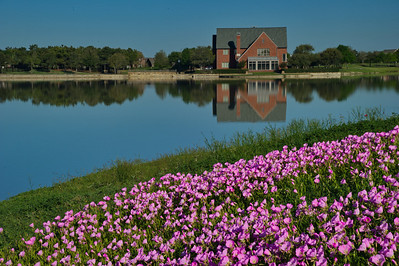 Lake_Bridgeland_Pink_Evening_Primroses_RAW9231