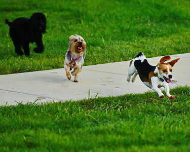 Bridgeland_Dog_Park_Tanner_&_Friends_8X10_D75_6904