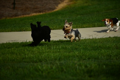 Bridgleland_Dog_Park_D75_6901