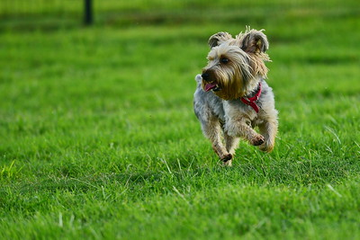 Bridgleland_Dog_Park_D75_6906x