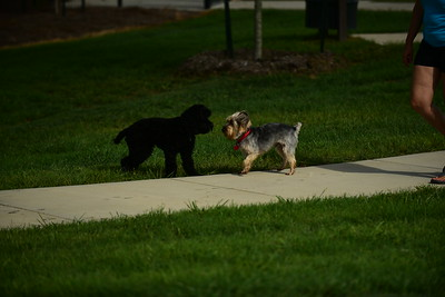 Bridgleland_Dog_Park_D75_6900
