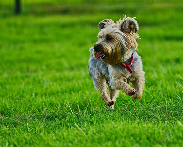 Bridgeland_Dog_Park_Tanner-Runner_8X10_D75_6906