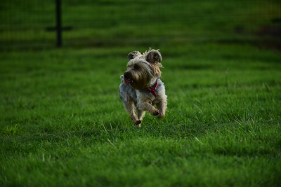 Bridgleland_Dog_Park_D75_6906