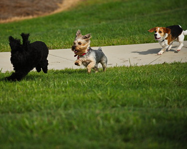 Bridgeland_Dog_Park_Tanner&Buddies_8X10_D75_6901