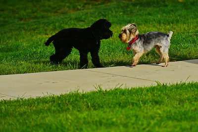 Bridgleland_Dog_Park_D75_6900x