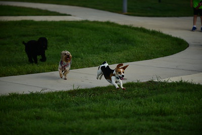 Bridgleland_Dog_Park_D75_6904