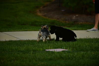 Bridgleland_Dog_Park_D75_6899
