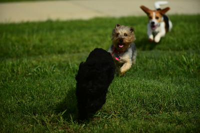 Bridgleland_Dog_Park_D75_6903