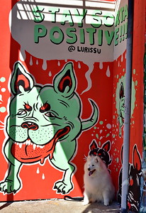 02252017_Houston_Wall_Murals_Dogs_750_0916