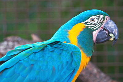 Houston Zoo with BPG