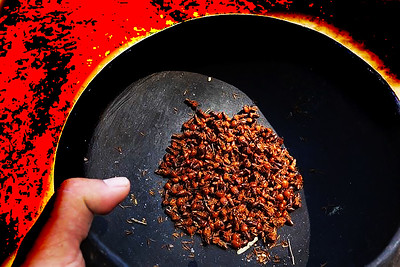 THE SACRED ANTS AFTER RITUAL ARE DEAD