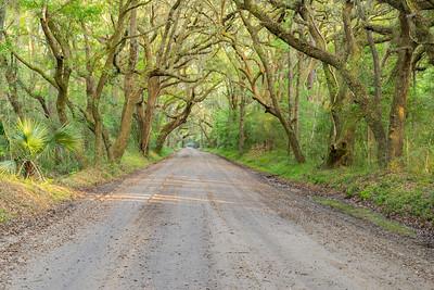 Enchanted Road