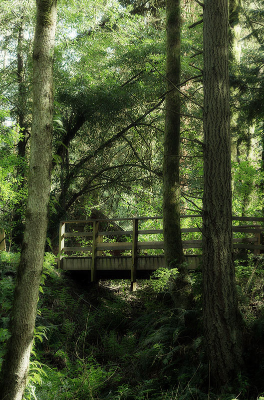 Audobon Nature Center Trail Bridge (58952674)