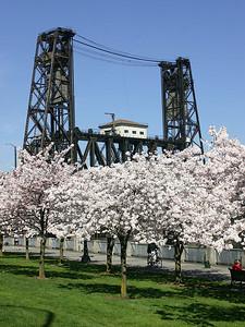 Steel Bridge and Cherry Trees