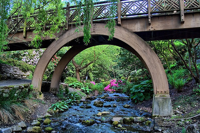 Pedestrian Bridge, Crystal Springs Rhododendron Garden, Portland Oregon  | Sigma 18-50mm f/2.8 EX DC