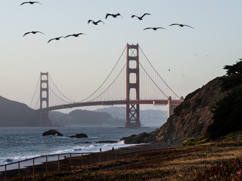 Gulls @ Golden Gate Sunset