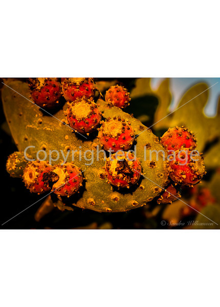 Cactus Flower, December 2009