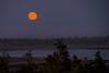 Moonrise-8180309