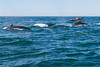 Whale watching-8190341