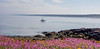 Brier Fireweed, Boat-100201